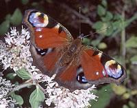 Vlinderwandelingen