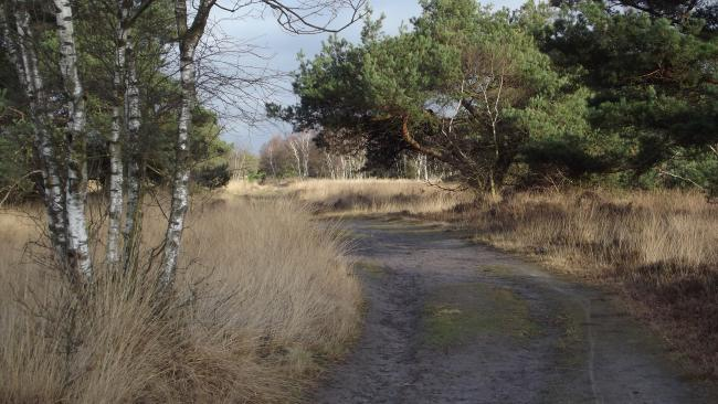 Aardbossen-tocht