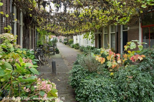 Cultureel historische wandeling door Haarlem