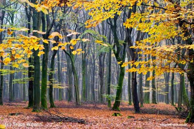 Wandelen in het Speulderbos