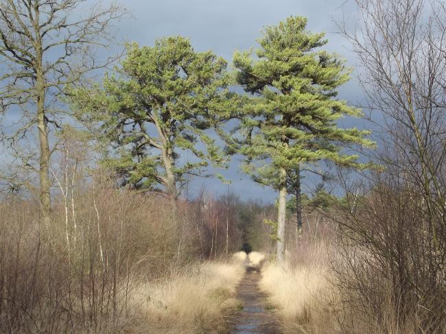 Moddervelden-tocht