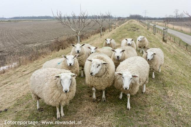 Groene Wissel Arnemuiden 2