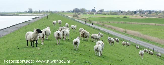 Groene Wissel Kwadendamme
