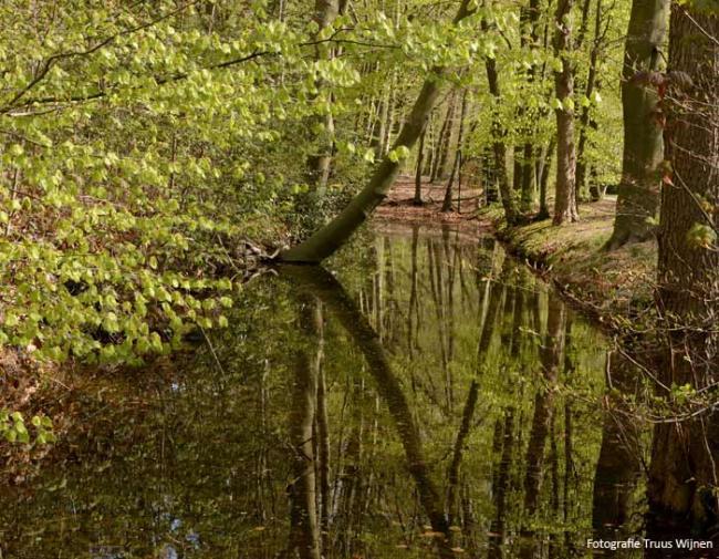 Wandeling Driebergen