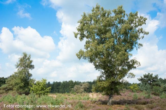 Groene Wissel Alphen (NB)