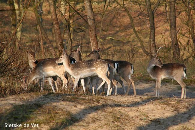 Wildlife-wandeling A'damse Waterleidingduinen
