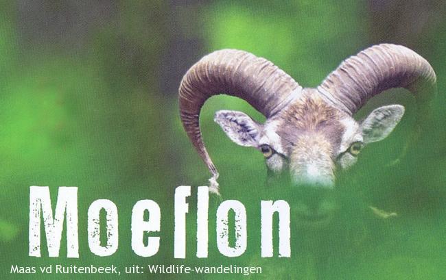 Wildlife-wandeling De Hoge Veluwe