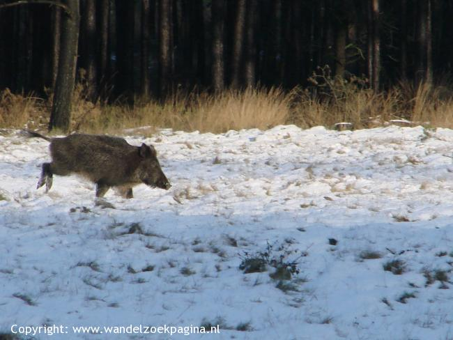 Wildlife-wandeling Laag-Soeren