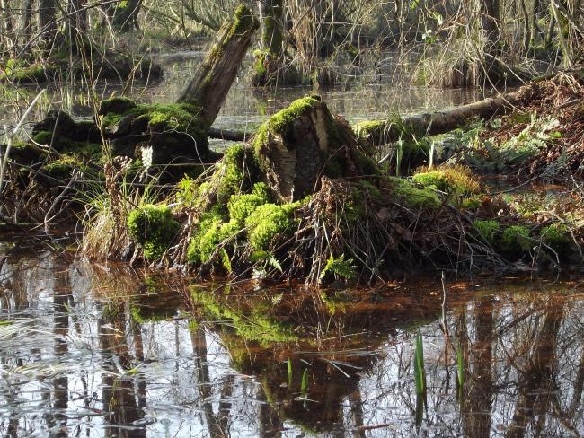 Lollebeek-tocht