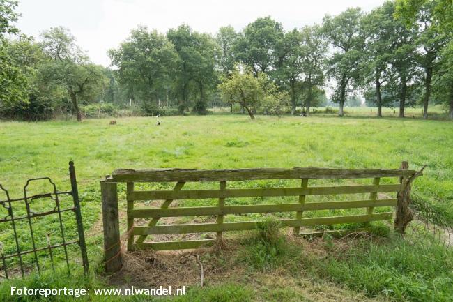 Groene Wissel Leek