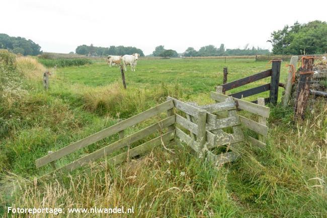 Groene Wissel Texel, Den Burg