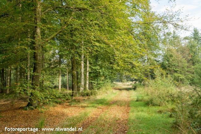 Groene Wissel Hooghalen 2