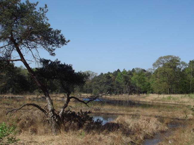 Hazenputten-de kleine tocht