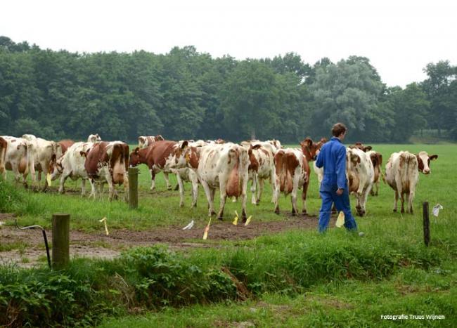 Albergen - Herinckhave - Kroezeboom