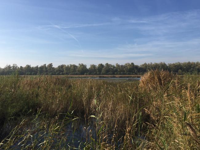 Boswandeling vloedbos Biesbosch