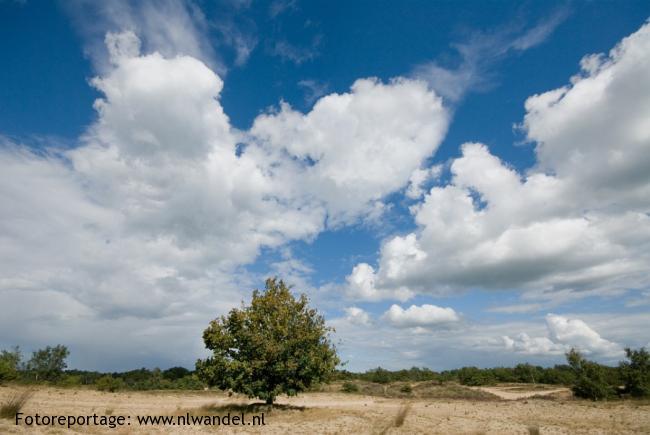 OV-Stapper Loonse en Drunense duinen