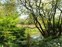 Amstelveens Groen