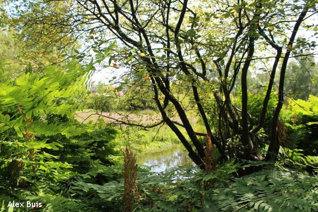 Amstelveens Groen: Parkenwandeling