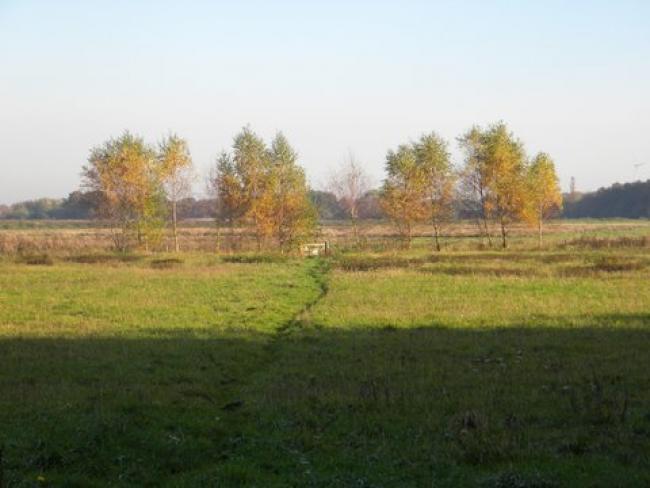 Westerwolde Lus 5