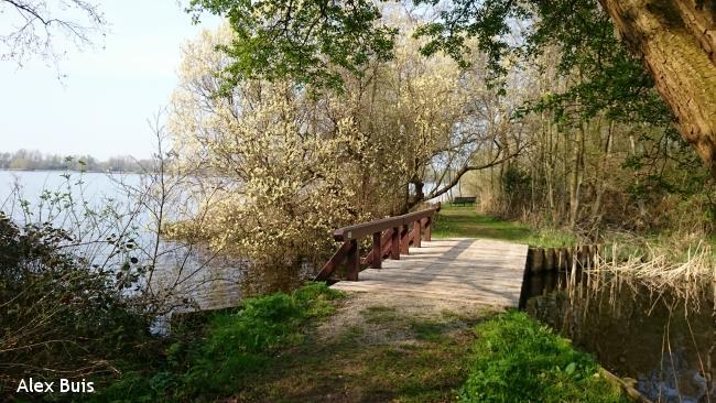Amstelveens Groen: Bos en Stad