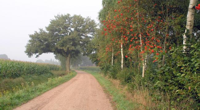 Op pad rondom het Riels Laag