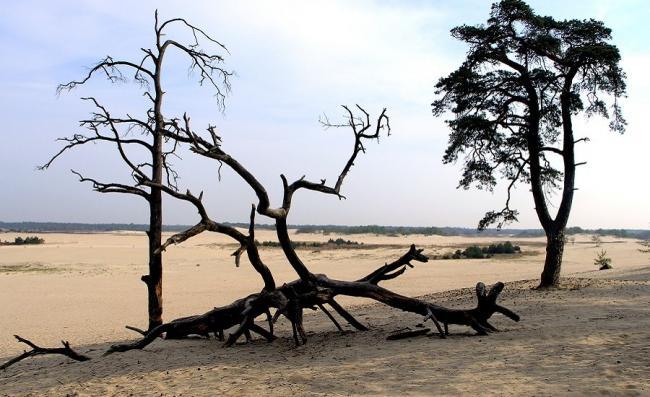 Struinen door de Babantse Sahara