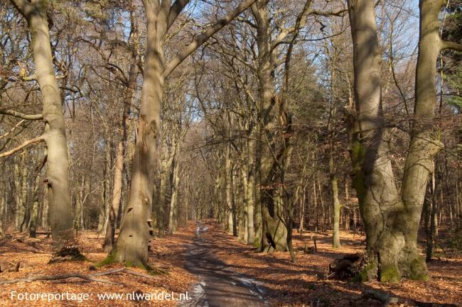 Groene Wissel Veenendaal-West
