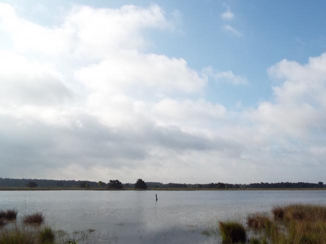 Landschotsche Heide-tocht