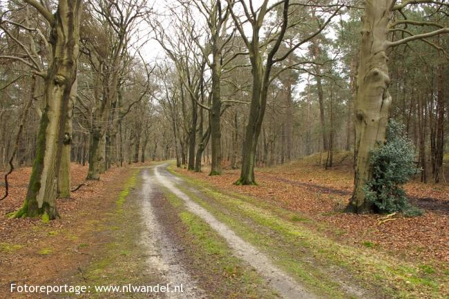 Groene Wissel Bilthoven 1