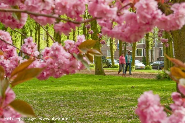 Groene Wissel Rijswijk