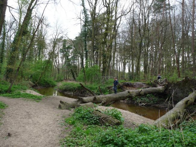 Boswandeling beekbos Bekendelle Winterswijk