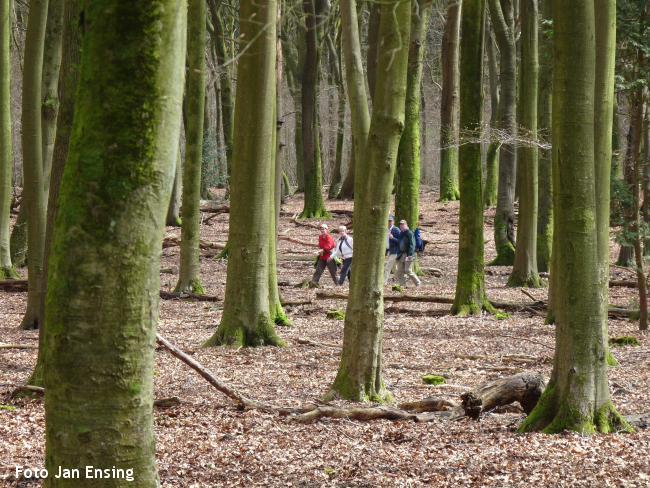 Boswandeling Veluwse malebossen Garderen