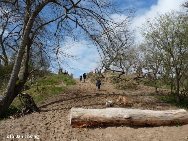 Boswandeling binnenduinbos Overveen