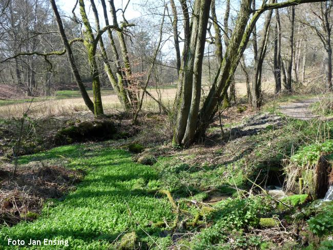 Boswandeling bronbossen Springendal