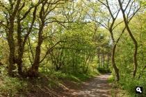 Nieuwe Scheveningse Bosjes