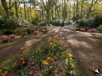 Clingendael, Japanse tuin
