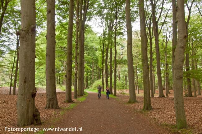 Groene Wissel Hilversum Sportpark