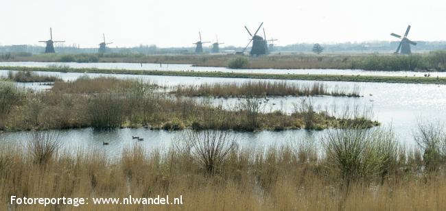 Groene Wissel Kinderdijk