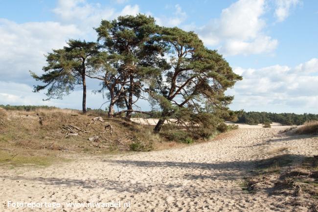 NS-wandeling Hierdense Poort