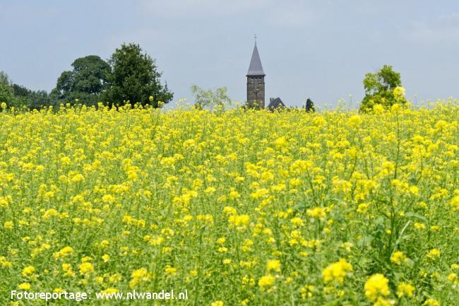 NS-wandeling Limburgs Plateau
