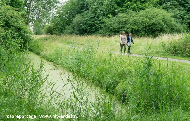 Groene Wissel Utrecht Vaartsche Rijn