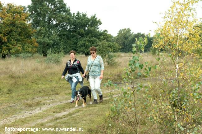 Groene Wissel Middelbeers