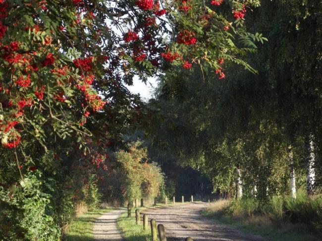 Vlasroot-de kleine tocht