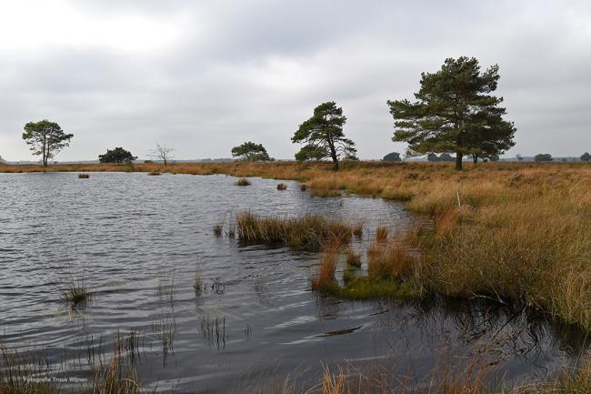 Dwingelose Heide