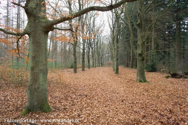 Groene Wissel Bussum-Zuid