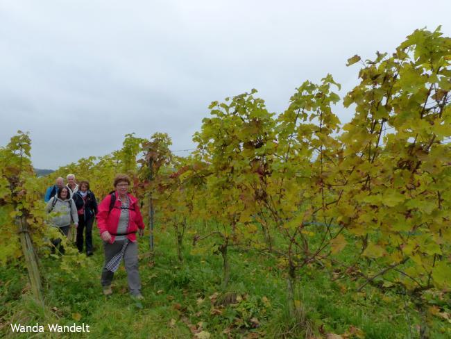 WijnWandeling Groesbeek