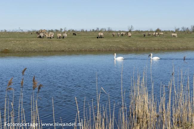 Groene Wissel Almere-Buiten