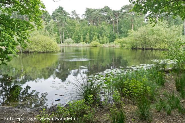 Groene Wissel Bergen op Zoom