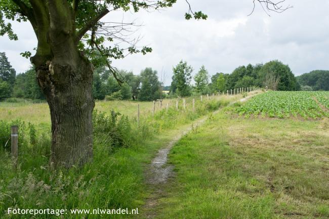 Groene Wissel Nuth
