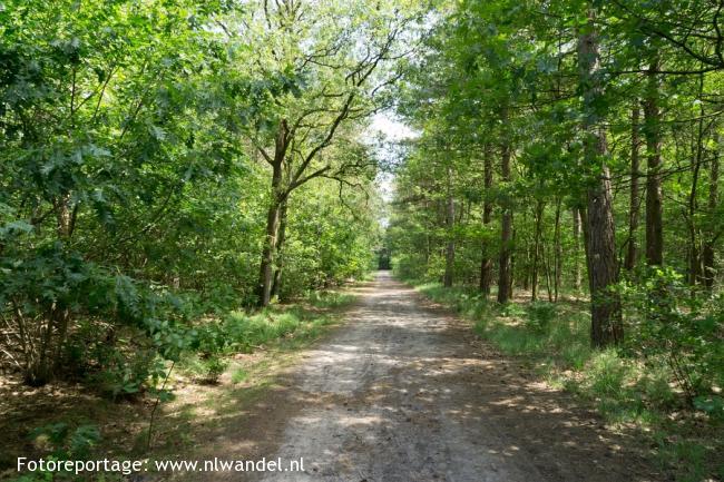 Groene Wissel Gilze-Rijen